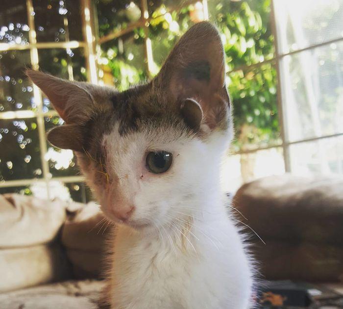 这只小猫有4只耳朵1只眼,历经磨难如今收获幸福
