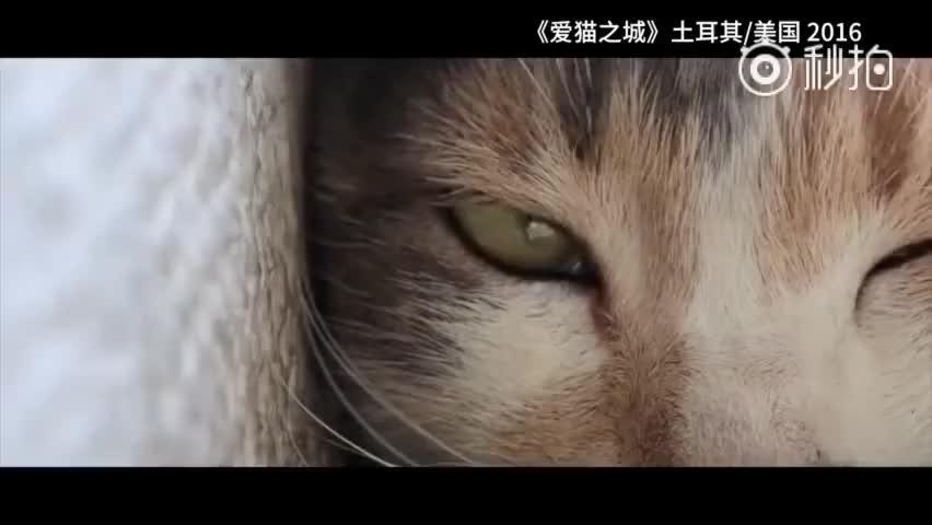 第八届北京国际电影节新版展映预告片