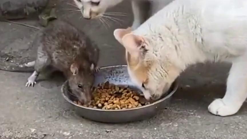 这两猫肯定是腐败分子,像不像现实版的猫和老鼠