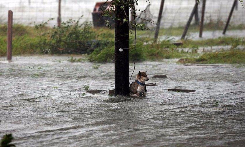 美国飓风灾害中的狗狗,这只自带狗粮的成了网红