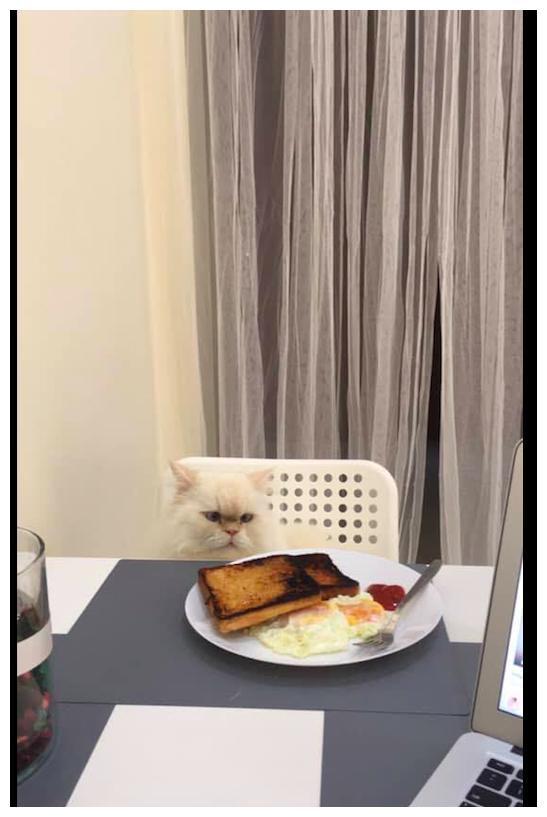 网友每天做同样的早餐,连猫咪看了都不想吃,眼神好生无可恋