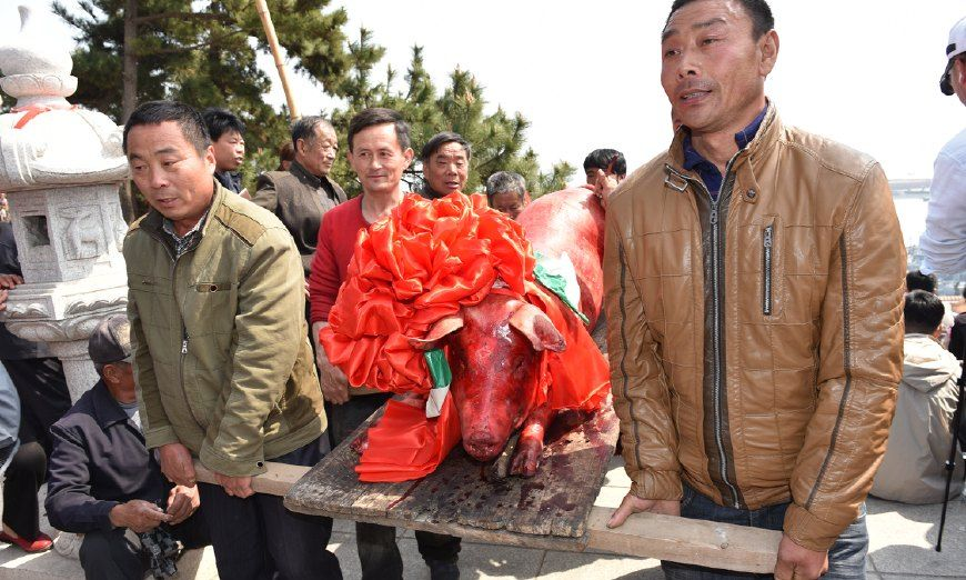 谷雨渔民祭海祈福,几十头大猪当供品场面壮观