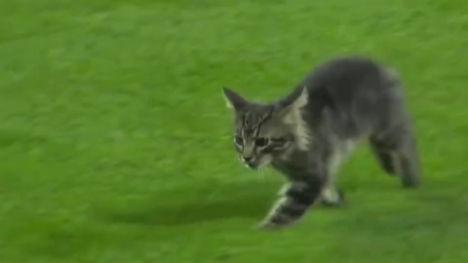 猫咪误入一场棒球比赛解说开始不务正业镜头记录全过程