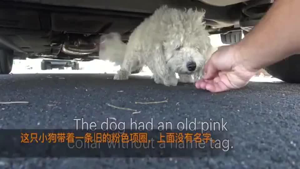 一直睡在车底的流浪狗被救助后变得好萌好可爱