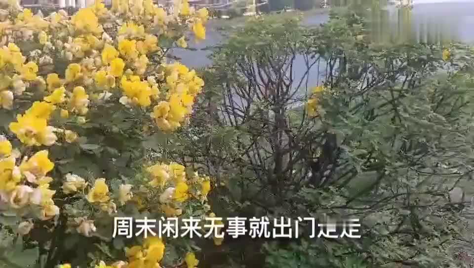 广东顺德容桂曾经落后的村庄如今通过征地分红都过上好生活