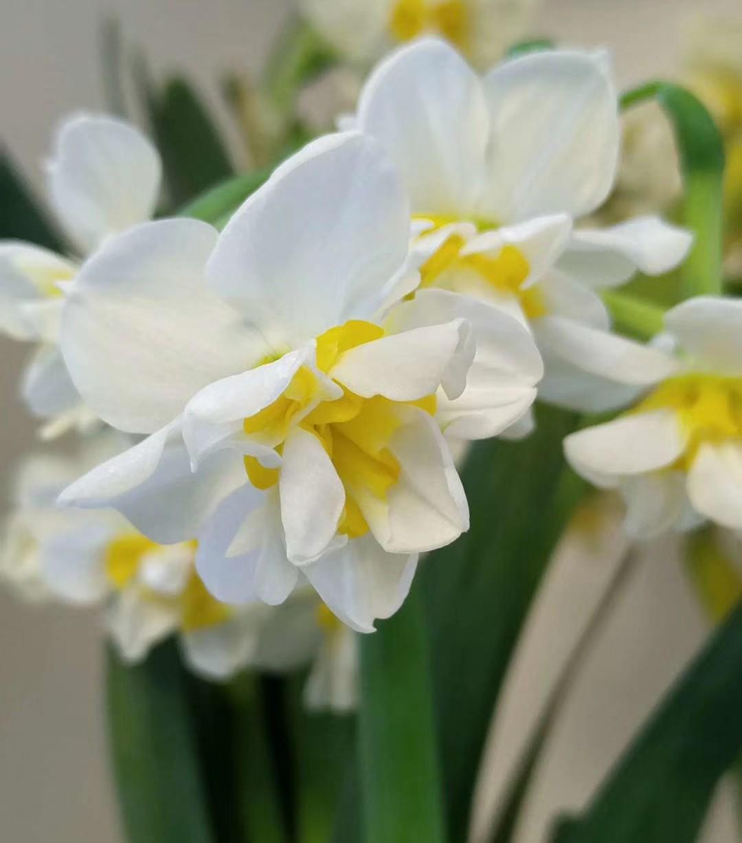 """春节来点""""喜庆""""花,红红火火,新的一年好运不断"""