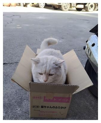 """纸箱借放路边 一下子就长出""""大脸猫"""""""