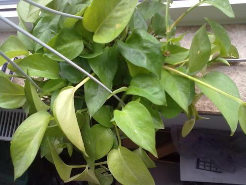 持续高温,5个方法给植物降温,简单有效,植物再不怕被热死