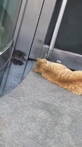 猫是爱的抚摸,老鼠想完了,这辈子到头儿了