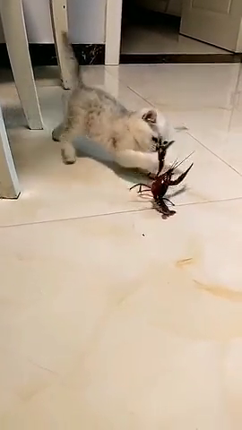 猫不就是一只小龙虾嘛,我可不怕你