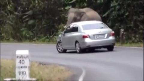 动物世界 这头大象太邪恶了