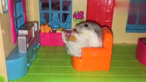 小仓鼠吃着零食看着电视这惬意的生活太让人羡慕了