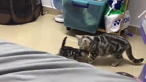 孕傻的猫猫,都忘记自己生了崽崽了,都飞了起来