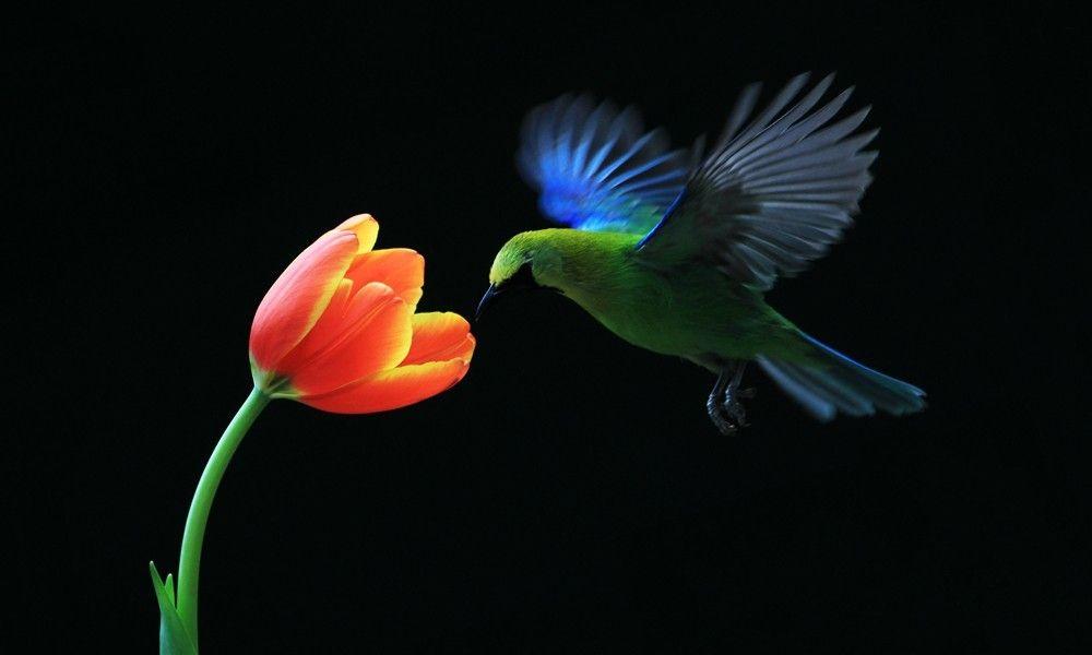 生态摄影:花儿与鸟儿
