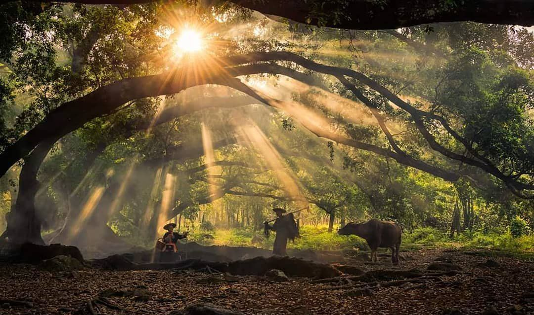 福建霞浦杨家溪的古榕树群,这意境太美了!