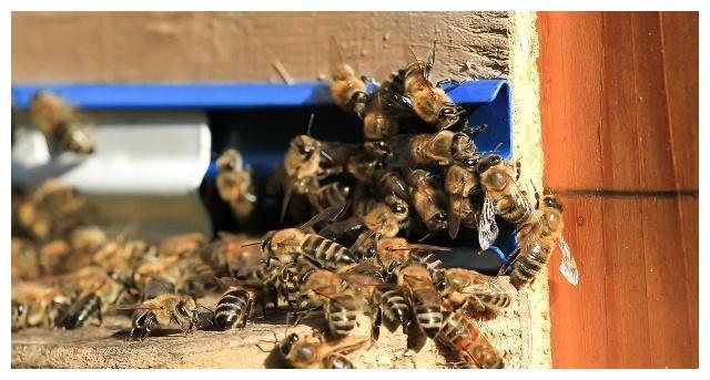 蝴蝶逃跑被捉回,没捉回的在箱外一直打架,蜜蜂?防城港回事图片