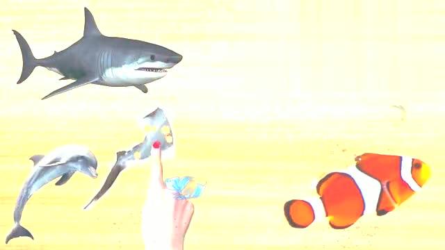 小朋友认识座头鲸吗?小朋友喜欢座头鲸吗?它可是很大的哦!