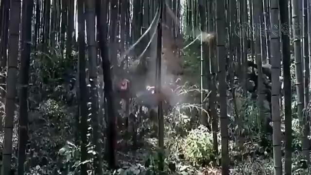 全程高能的越战电影,却为片名所耽误!你千万别再错过!