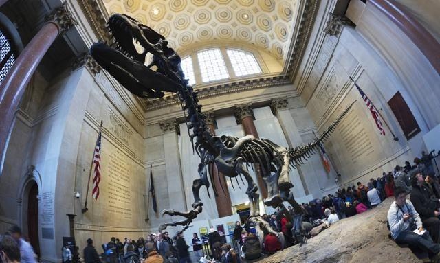 本来我对自然历史博物馆不感兴趣,没想到刚一进场非常震撼