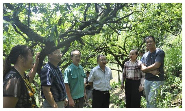 灌阳组团赴灵川考察学习柰李种植技术