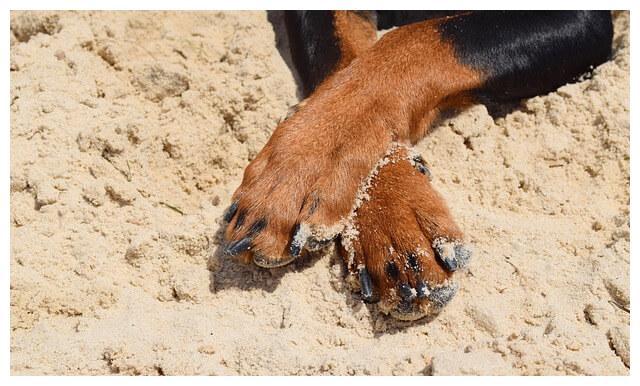给狗狗剪指甲不单为了好看!对关节健康很大影响