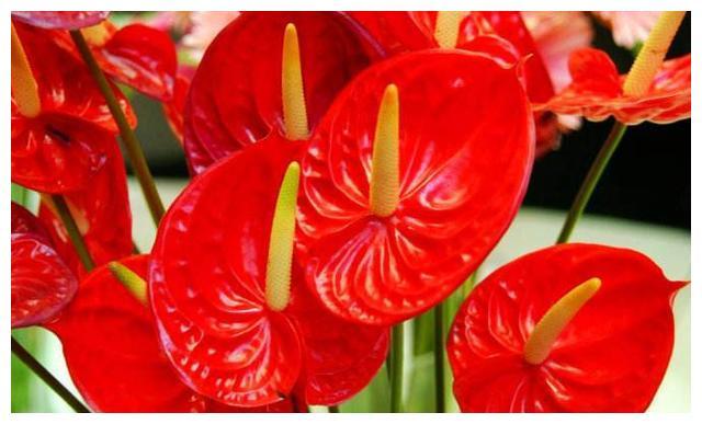 """家里""""采光""""差,养这几种花,放在散光下,也能长得绿油油"""