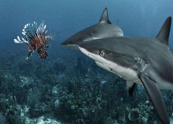 加勒比海域毒鱼泛滥,连鲨鱼都不愿碰,当地人号召直接吃掉