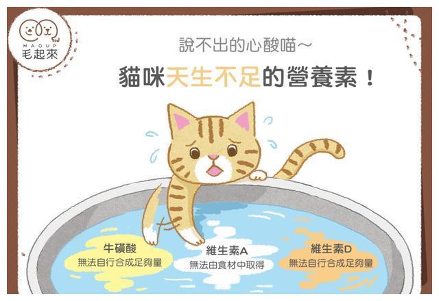 只能靠吃补充 猫咪天生缺3营养素
