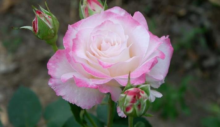 这些花朵超好养,随手一种就能活,轻松开爆盆,花朵美艳又迷人