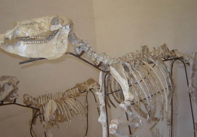 怎么辨认动物化石?