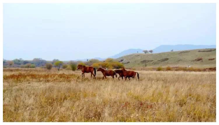 来木兰围场,赏你想不到的草原之秋