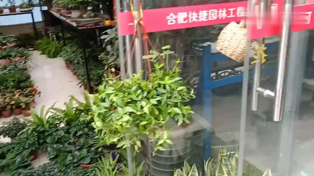 合肥清溪路花式品种还多还不贵比花店卖的便宜太多了