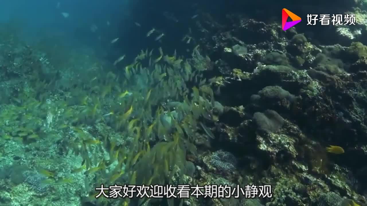 韩国发明人造鱼鳃往嘴里一放立马就像鱼一样可以随意呼吸