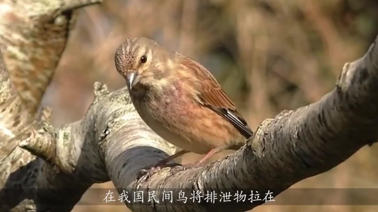 小男孩被鸟攻击专家此鸟记忆力惊人当心它记仇