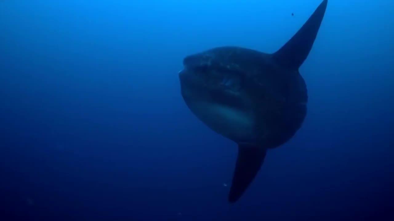 翻车鱼传奇的一生就是一部血泪史既心疼又搞笑