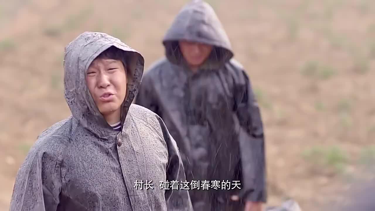 村长种的玫瑰遇上倒春寒这次寒潮将持续一周这可愁坏了村长