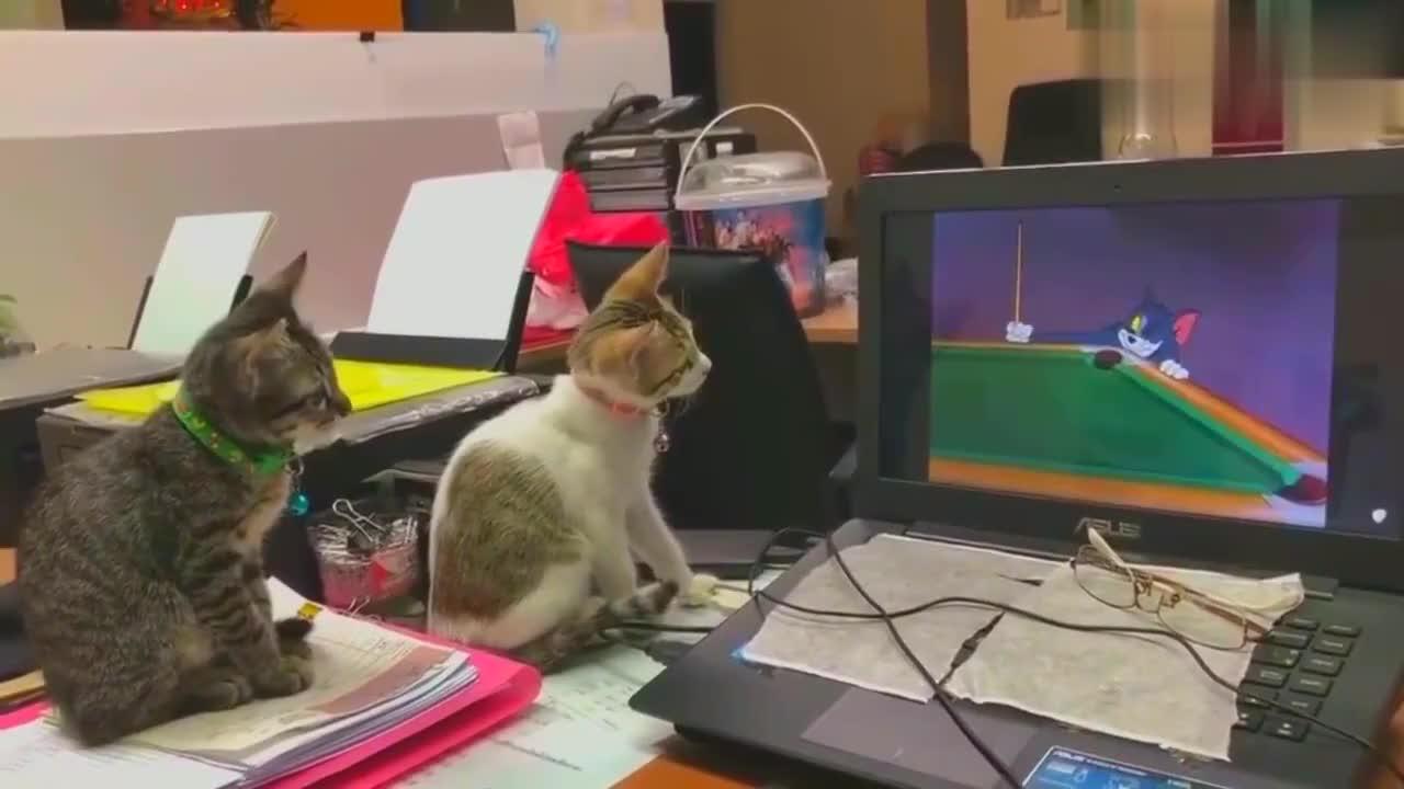 两只猫咪看动画片,看到老鼠补这样,戏弄自己想不想去试试呀