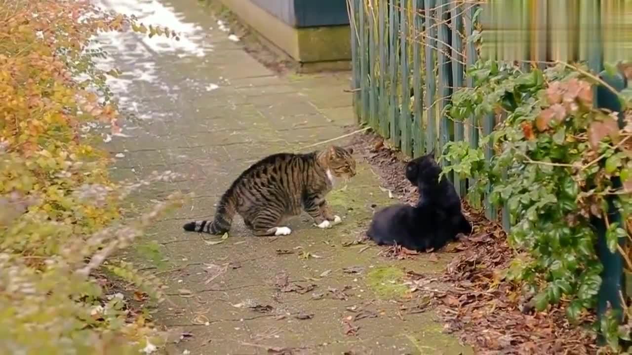 路边发现两只流浪猫在打架,打的好凶,想去阻止又不敢