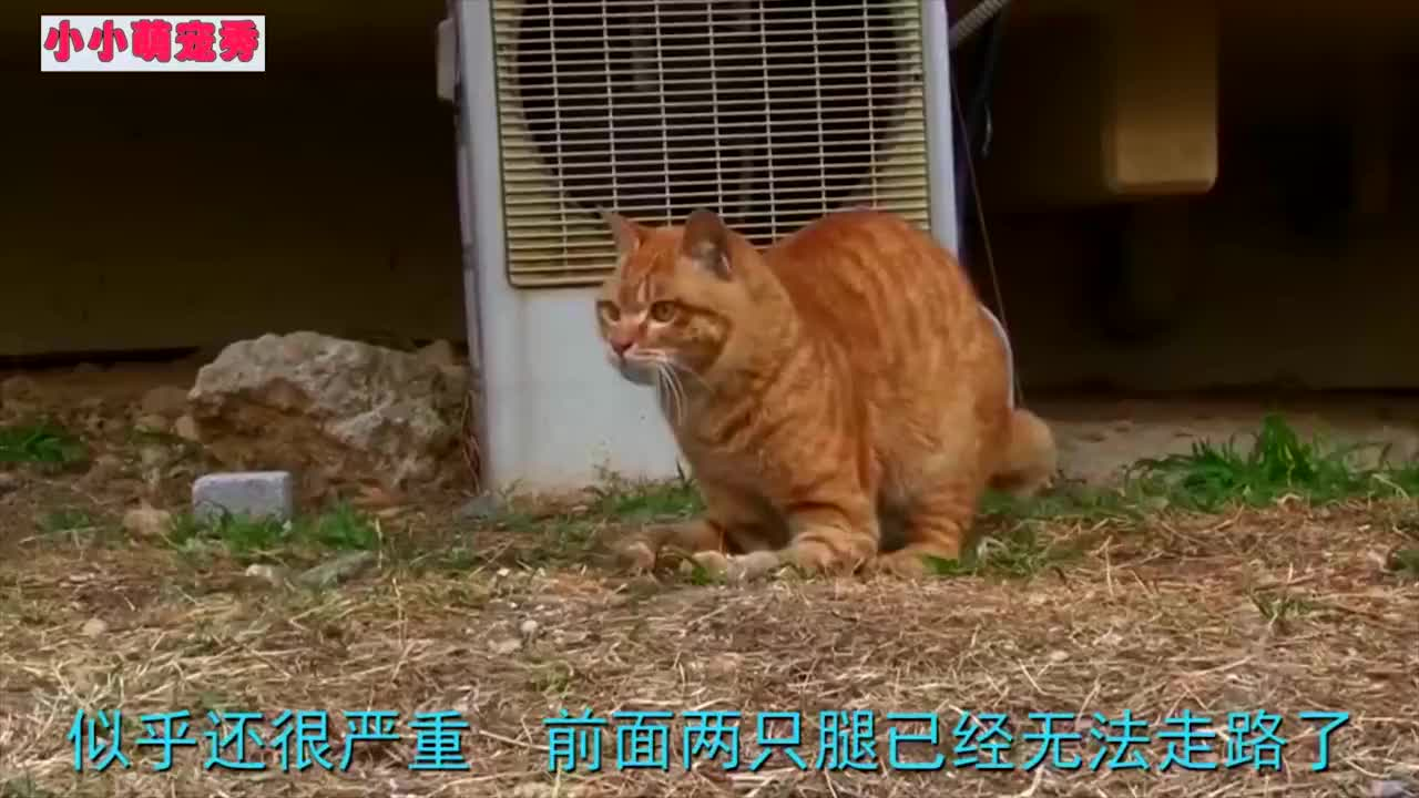 流浪猫妈妈脊椎断裂,拼命保护孩子,确认安全后躺在一旁等待死亡