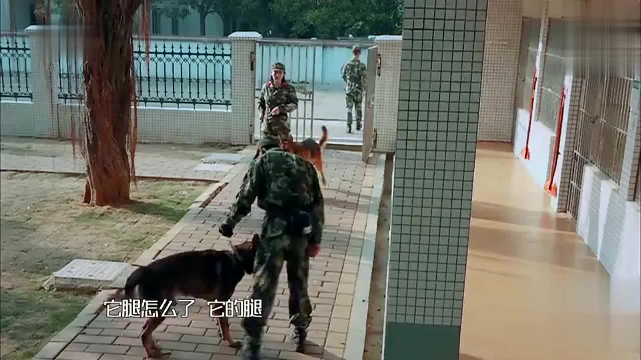 《奇兵神犬》艾勒薇斯咬伤昆龙张馨予带爱犬亲自道歉