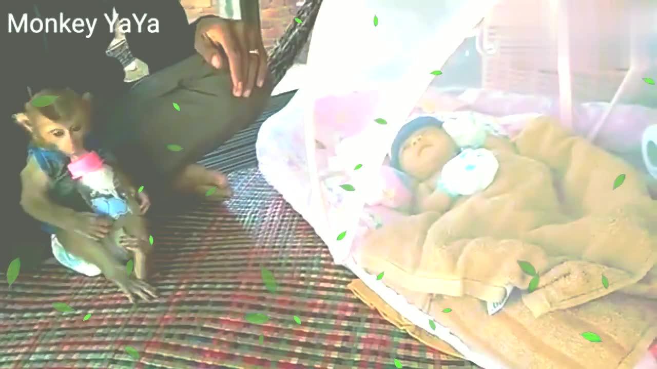 孤儿猴和小男孩互动,好可爱哦!