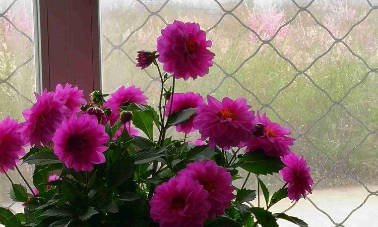 """秋天养花就养""""它"""",花开媲美玫瑰,开花一团一团,小巧玲珑,美"""