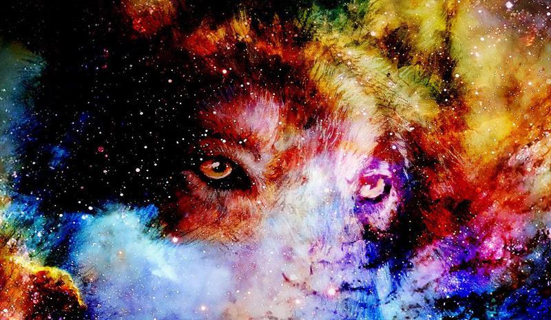 星座:口嫌体正直的女生范例狮子座,让人又爱又恨双鱼座男与狮子座典型图片
