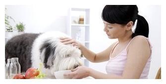 """为什么狗狗祖先经常""""狼吞虎咽""""吃食,却不会噎死?原因有5点"""