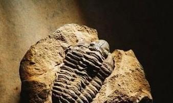 古生物还原图全靠画师的想象?画师是如何还原它们的?