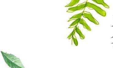 这些蔬菜种在家里美观又环保,对身体健康还有帮助,吃菜也免费了