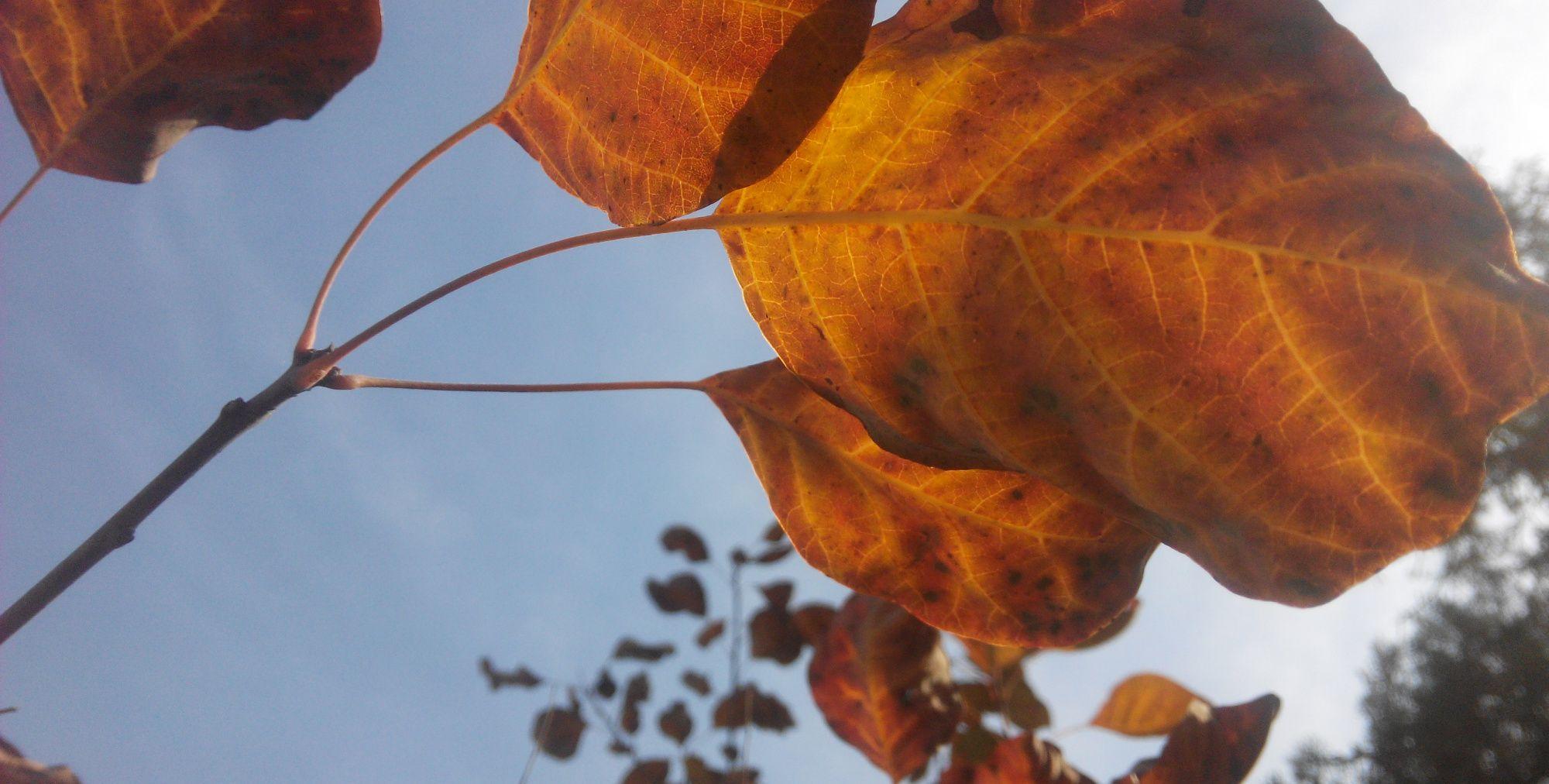 秋天,我去大寨上看过红叶(2015)