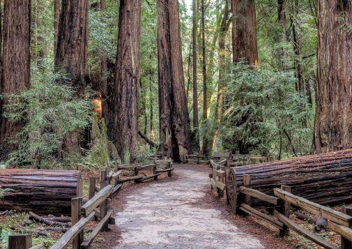 穆尔红杉国家公园,位于旧金山郊外,是游客们的旅游胜地之一