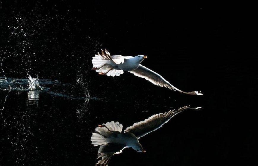 飞翔的精灵,国外鸟类摄影作品欣赏