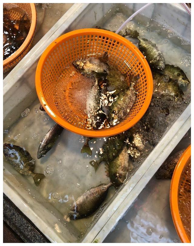 北京底层白领如何每天能吃到一条海水鱼?